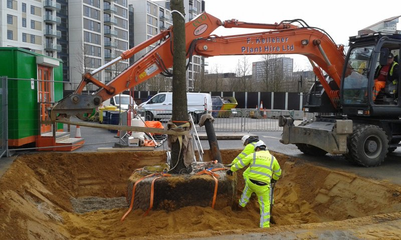 Filling in tree pit