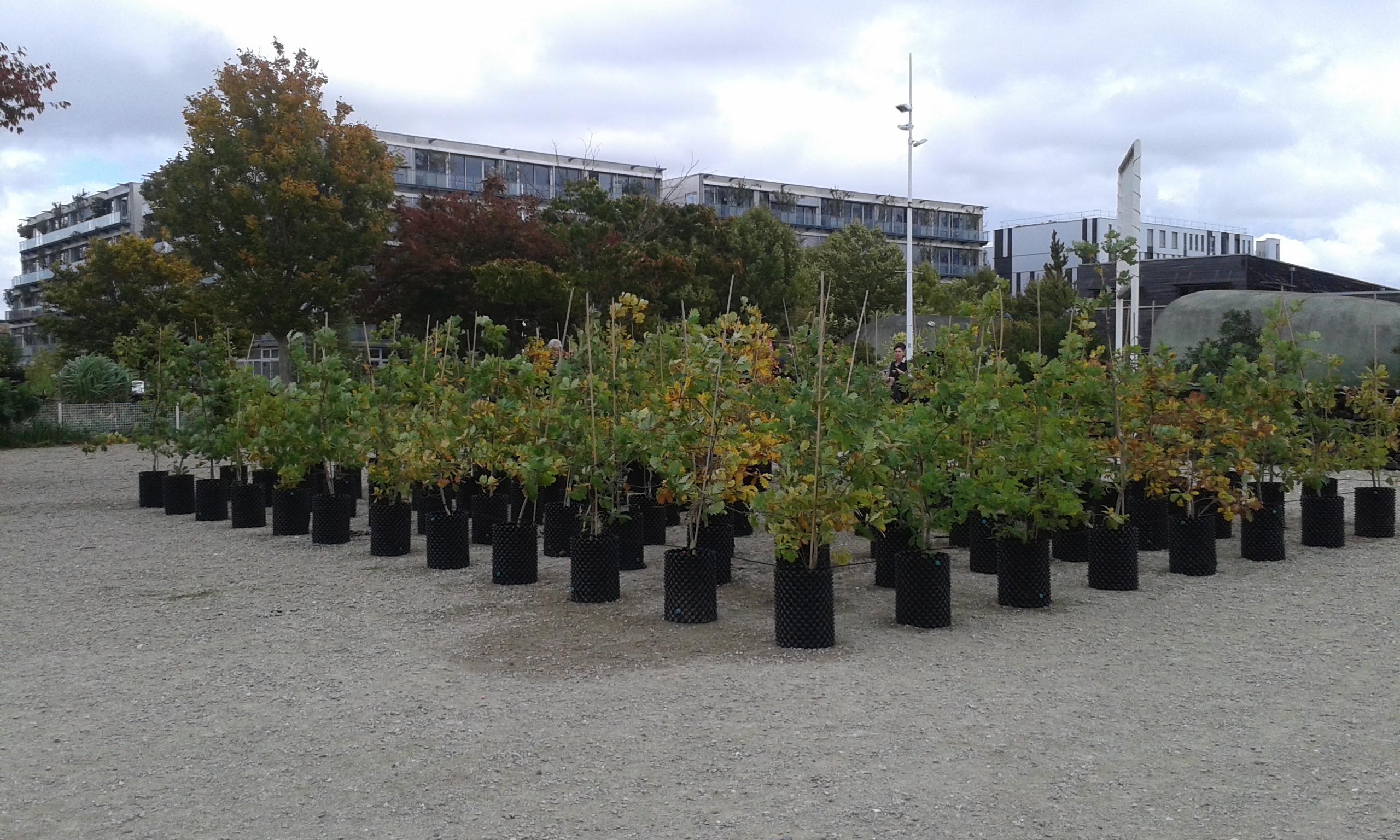Beuys 39 acorns trees on tour ackroyd harvey for Le jardin botanique bordeaux