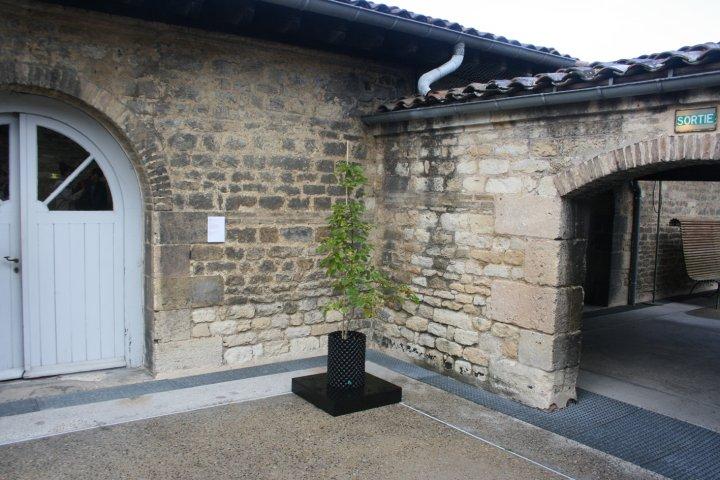 Beuys' Acorns: Trees on Tour 2015 © Ackroyd & Harvey (CAPC, Bordeaux)