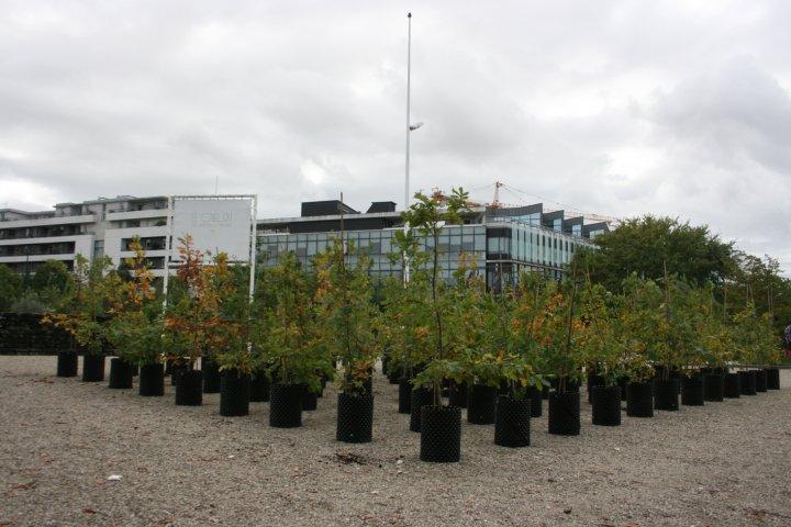 Beuys' Acorns: Trees on Tour 2015 © Ackroyd & Harvey (Jardin Botanique, Bordeaux)