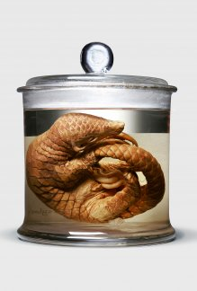 Conflicted Seeds + Spirit, Ackroyd & Harvey, 2016 (Chinese Pangolin)