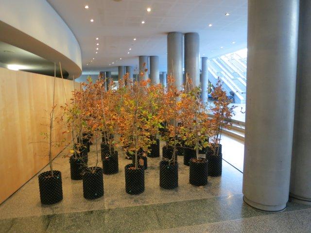 Beuys' Acorns: Trees on Tour 2015 © Ackroyd & Harvey (La Filature, Mulhouse)