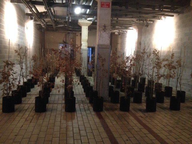 Beuys' Acorns: Trees on Tour 2015 © Ackroyd & Harvey (La Station, Nice)