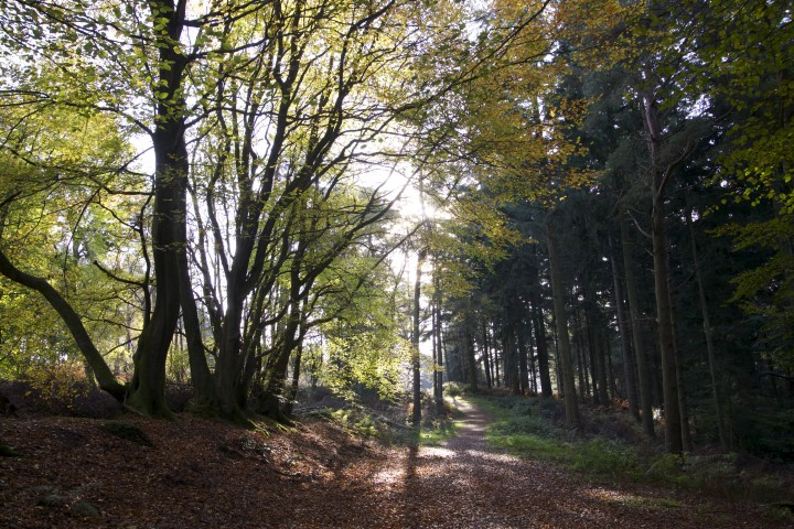 Leith Hill Proposed Drill site
