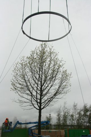Ring installation, History trees, 2012 © Ackroyd & Harvey