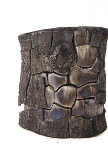 Burnt trunk ash LR copy